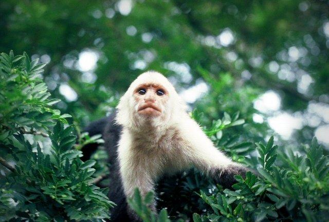 Manuel antonio monkey tour costa rica