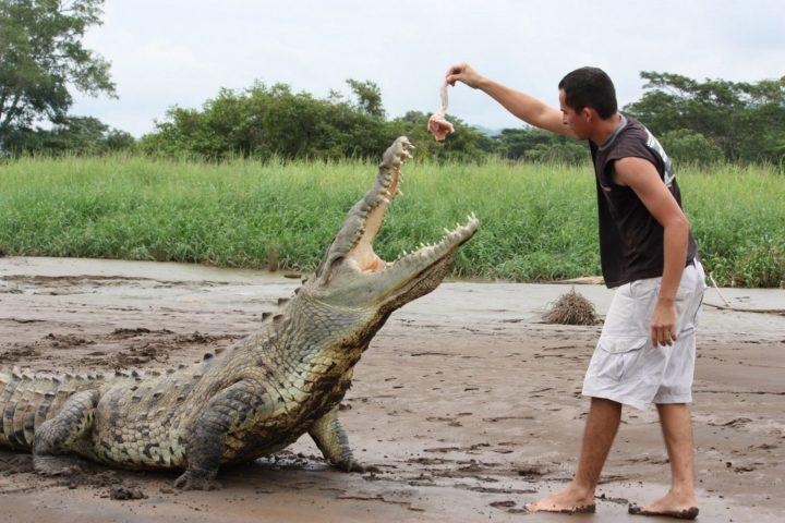 crocodiles tour Jaco