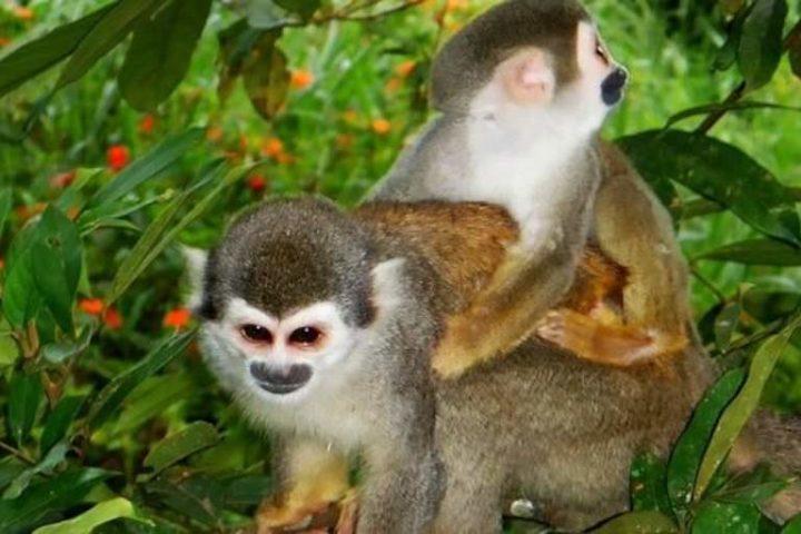 monkey tour manuel antonio